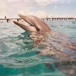 one of our dolphins