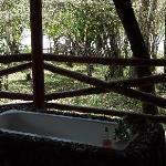 Zebras vor unserer Veranda