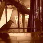 el loro del Tonatiuh