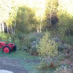 Tractor in the back yard