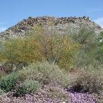 Living Desert Zoo and Gardens, Palm Desert, California