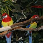 Pretty parrots