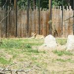 Zoo Boise Foto