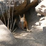 Horse-bunny... it is illegal to own a horse-bunny in Idaho without a licence... guess we all kno