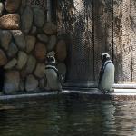 Penguins... of madagascar?