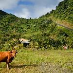 In the crater of the sleeping volcano, Bellevue Mountain in the North of Dominica