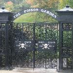 The Poison Garden, Alnwick Castle