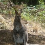 Foto de Hollybank Treetops Adventure