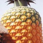 Big Pineapple Resmi