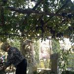 Zelfs de tuin met bloemen en druiventakken was een lust