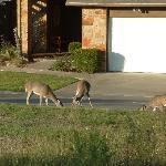 Beutiful deer everywhere!!