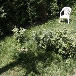 le jardin privatif.....