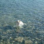 This is a dog that turned up one day at the hotel and we decided to go for a swim in the sea by