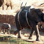 Elephant safari 1.