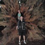 The roots of a Redwood