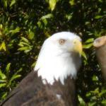 Jacksonville Zoo & Gardens Photo