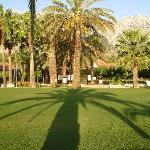 Palm trees everywhere