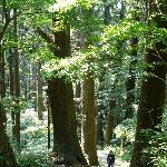 杉並木を歩いて五重塔を目指します