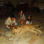 Animal experience in the lobby