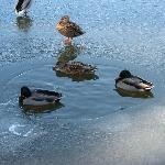 we love watching the ducks