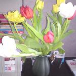 Tulips in the room