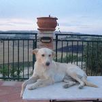 Bianchini - great dog!