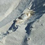 St. Augustine Beach Photo