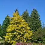 These are the lovely sights at the Washington Arboretum