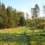 footpath from Sawrey Ground towards Tarn Hows