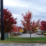 Beautiful fall surroundings