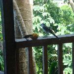 Birds at Hummingbird 1