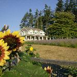 Damali farmhouse with sunflowers & lavender