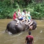 Fun with the Elephants!