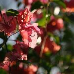 Bunaken blooms
