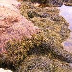 Pink Granite Tidal Pool