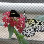 Papillon au Jardin Botanique de Munich. C'était une serre où les papillons étaient en liberté et