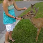 feeding deer in our yard on fripp island