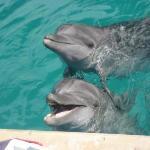 Vallarta Discovery Day Tours Photo