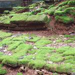 Moss at the Foot of Ancient Stones