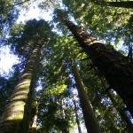 Foto de Arcata Community Forest