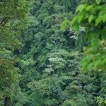 Costa Rica Sky Adventures - Monteverde Park