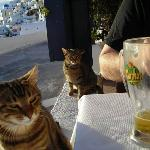 cats at the Taverna Imerovigli