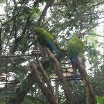 Simon Bolivar Parque Zoologico  y Jardin Botanico Nacional Aufnahme