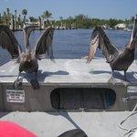 Foto de Totch's Everglades Island Airboat Tours