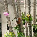 Flores y orquídeas a cada paso en los árboles de las veredas, en los jardines...