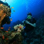Diving of Dahab