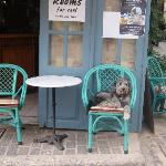 cafe where you check in, owners dog