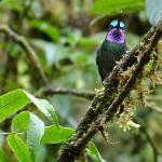 Een kolibri