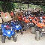 ATV riding at pineland