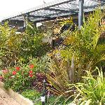 An oasis for the birdlife